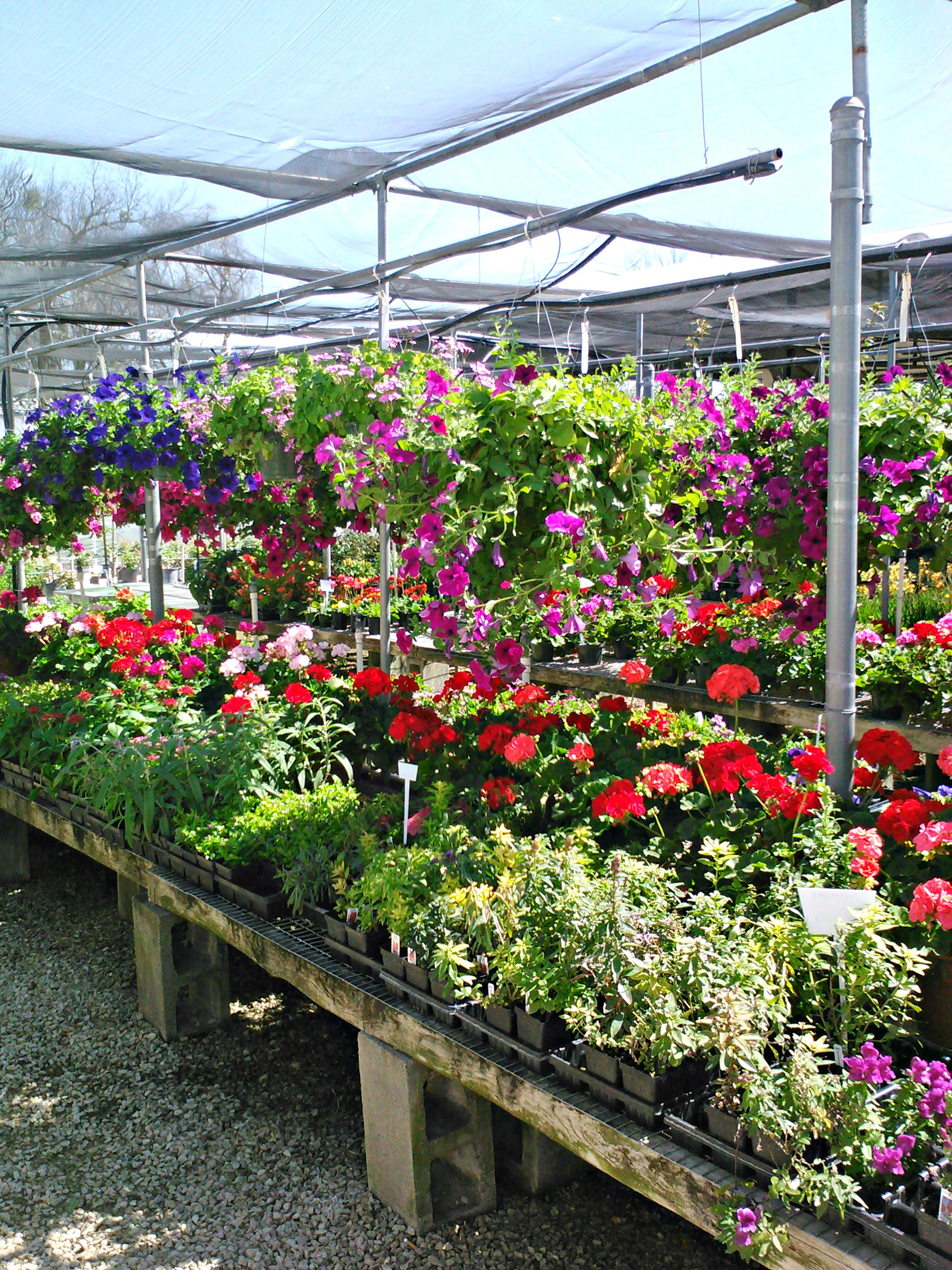 Snooper S Nursery Garden Center Located In Round Rock Texas